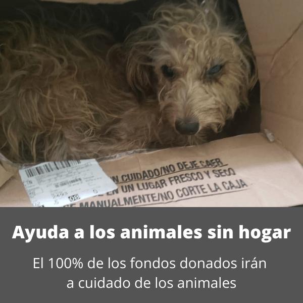 Ayuda a los animales sin hogar