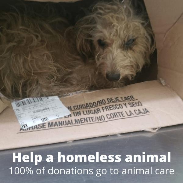 Mazatlan Animal Rescue Homeless Animal Picture